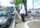 Américo encaminha ofício para Sema vistoriar árvores na Avenida Simeão Sobral