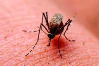 Anderson de Tuca adverte população para cuidados contra a Dengue